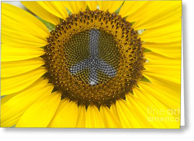 James Bo Insogna Greeting Cards - Sunflower Peace Sign Greeting Card by James BO  Insogna