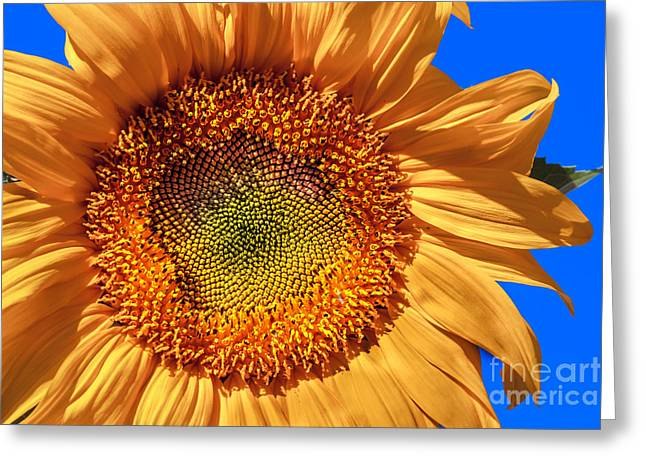 Haybale Greeting Cards - Sunflower Greeting Card by Robert Bales