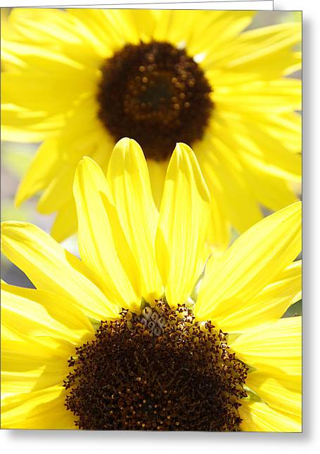 Sunflower Garden Greeting Cards - Sunflowers Greeting Card by Les Cunliffe