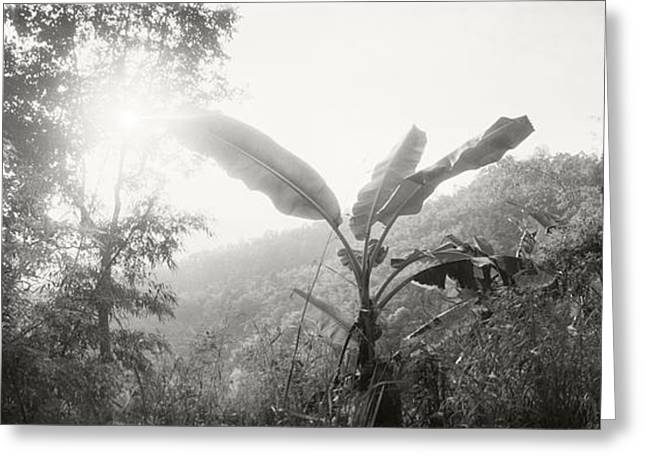 Chiang Mai Greeting Cards - Sunlight Coming Through The Trees Greeting Card by Panoramic Images