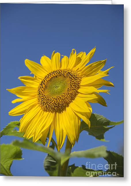 Sunny Day Greeting Card by Alana Ranney