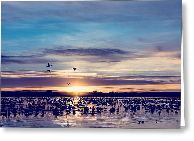 Cloud Reflections In Water Greeting Cards - Sunrise - Snow Geese - Birds Greeting Card by Sharon Norman