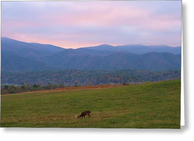 Gatlinburg Tennessee Greeting Cards - Sunrise In Cades Cove Greeting Card by Dan Sproul