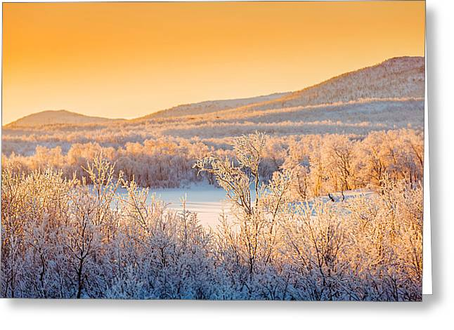 Temperature Greeting Cards - Sunset And Trees In The Frozen Greeting Card by Panoramic Images