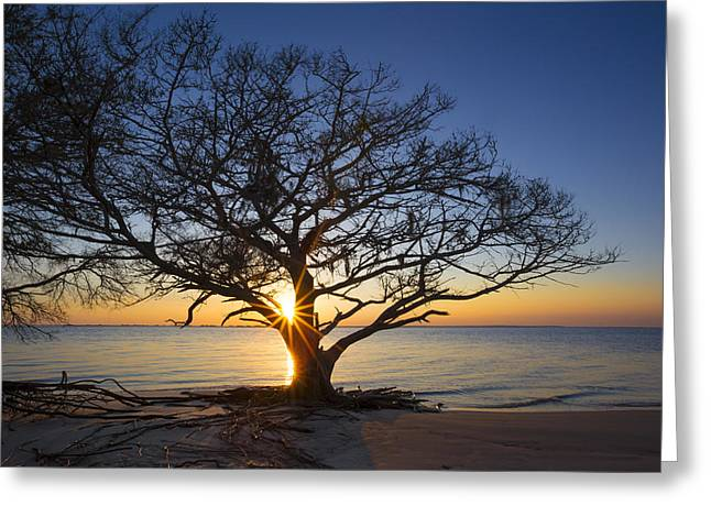 Tropical Beach Greeting Cards - Sunset Silhouette Greeting Card by Debra and Dave Vanderlaan