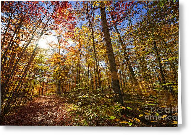 Fallen Leaf Greeting Cards - Sunshine in fall forest Greeting Card by Elena Elisseeva