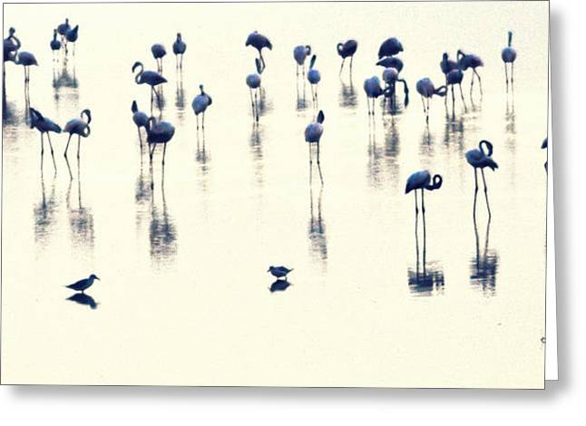 Reflection In Water Pyrography Greeting Cards - Swan Lake Greeting Card by Anusha Hewage