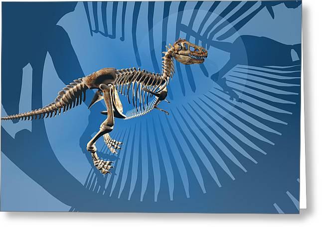 Bipedal Greeting Cards - T. rex Dinosaur Skeleton Greeting Card by Carol and Mike Werner