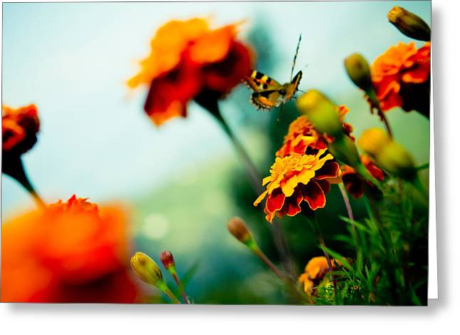 Buterfly Greeting Cards - Tagetes and Buterfly fly away  Greeting Card by Raimond Klavins