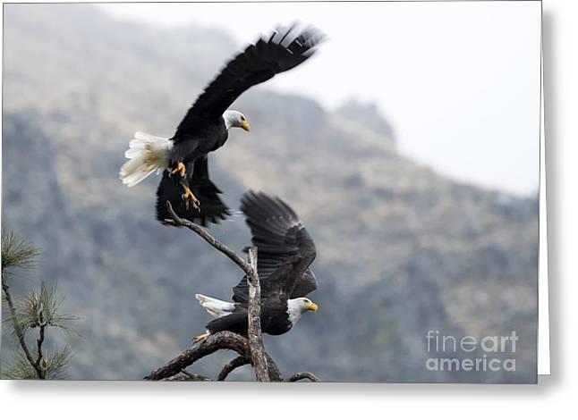 Eagle Greeting Cards - Take Flight Greeting Card by Mike Dawson