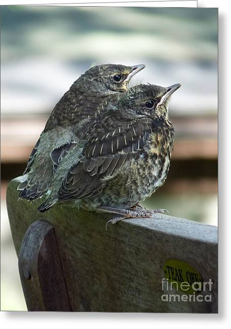 Young Birds Greeting Cards - Take Off Greeting Card by Lutz Baar