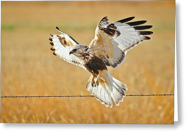Yellowstone Wildlife Greeting Cards - Taking Flight Greeting Card by Greg Norrell