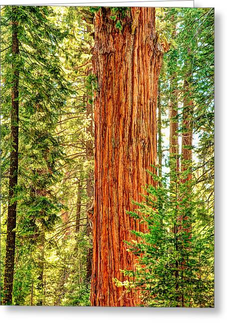 Sequoia National Park Greeting Cards - Tall One Greeting Card by Aron Kearney Fine Art Photography