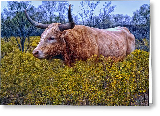 Steer Greeting Cards - Texas Longhorn Greeting Card by Mountain Dreams