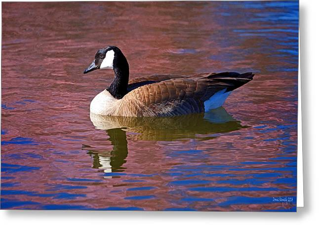 Canadian Goose Greeting Cards - That Touch of Pink Greeting Card by Donna Kennedy