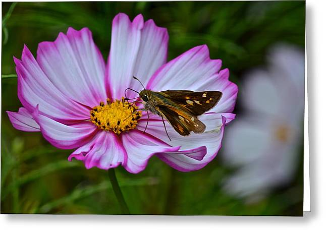 The Beauty Of Nature Greeting Card by Frozen in Time Fine Art Photography