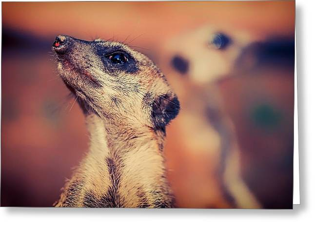 Meerkat Photographs Greeting Cards - The Lookout Greeting Card by Nicole Kohler
