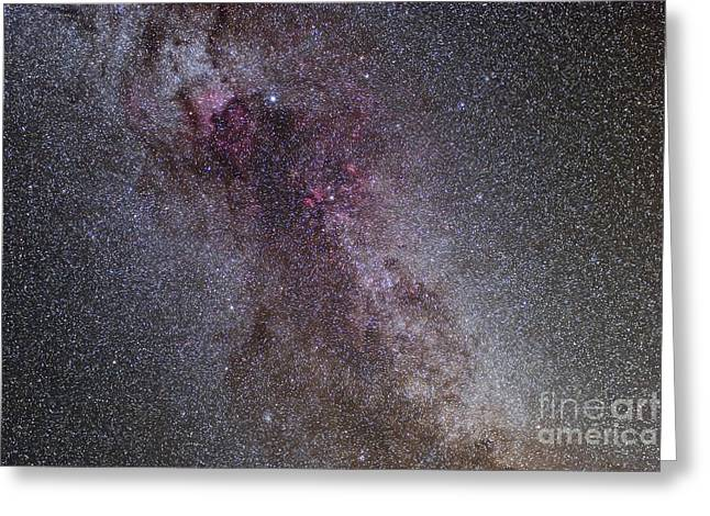 Cygnus Greeting Cards - The North America Nebula And Dark Greeting Card by Alan Dyer