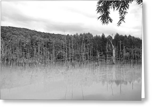 Lovely Pond Greeting Cards - The Perfect Pond Greeting Card by Mountain Dreams