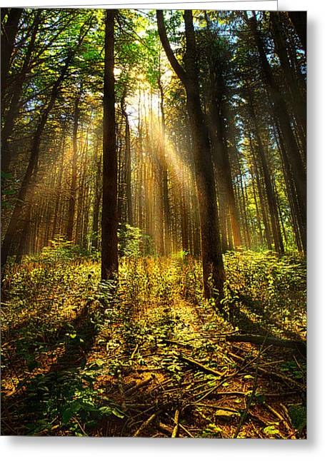 Pines Greeting Cards - The Pines Greeting Card by Phil Koch