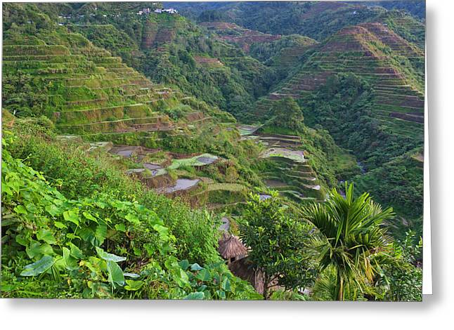 The Rice Terraces Of The Philippine Greeting Card by Keren Su
