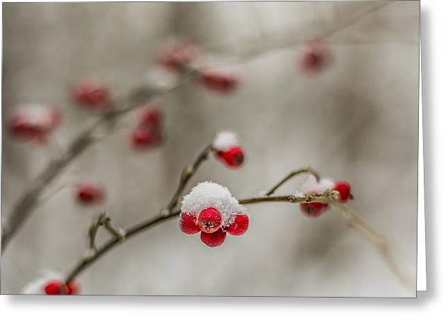 Winterly Forest Greeting Cards - The season of love Greeting Card by Aldona Pivoriene