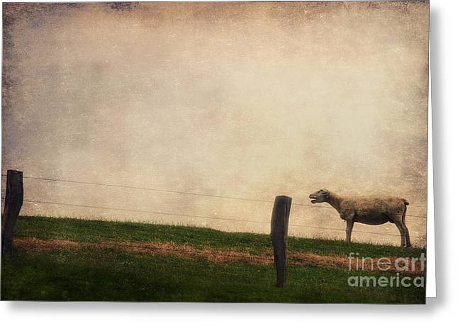 Sheep Photographs Greeting Cards - The Sheep Greeting Card by Angela Doelling AD DESIGN Photo and PhotoArt