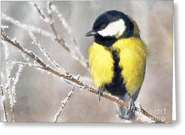 Blue_tit Greeting Cards - The tit Greeting Card by Odon Czintos