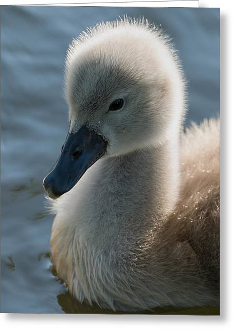 Soft Fur Greeting Cards - The ugly duckling Greeting Card by Michael Mogensen