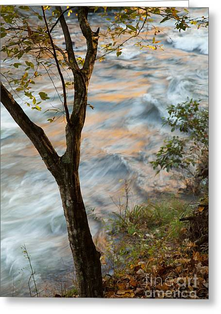 Beavers Bend Park Greeting Cards - The View Greeting Card by Iris Greenwell