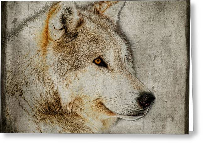 Preditor Greeting Cards - The Wolf Greeting Card by Steve McKinzie