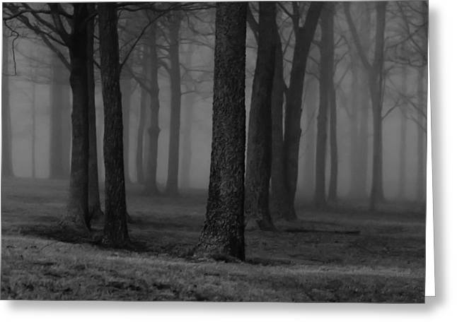 Winter Night Greeting Cards - The Woods at Night Greeting Card by Jim Finch