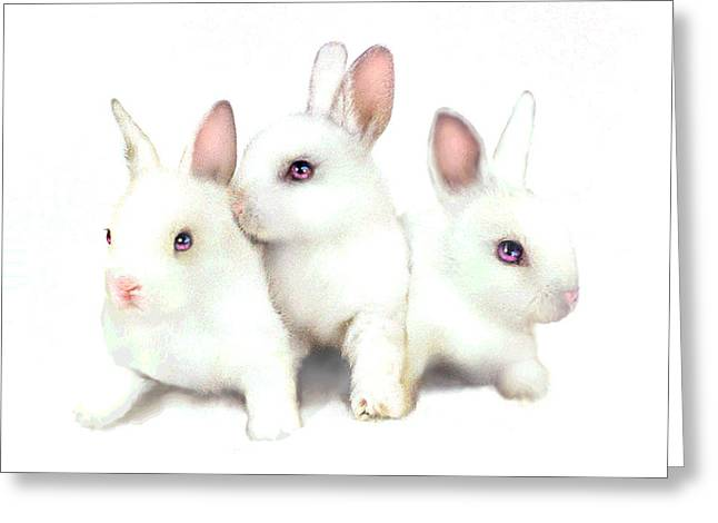 Pink Ears Greeting Cards - Three Bunnies Greeting Card by Robert Foster