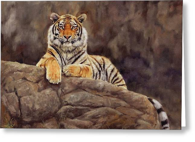 Siberian Greeting Cards - Tiger Greeting Card by David Stribbling