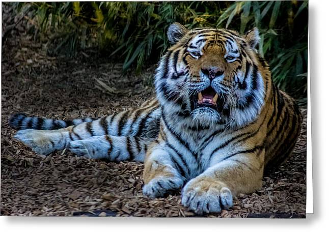 Fangs Greeting Cards - Tiger Portrait Greeting Card by Martin Newman