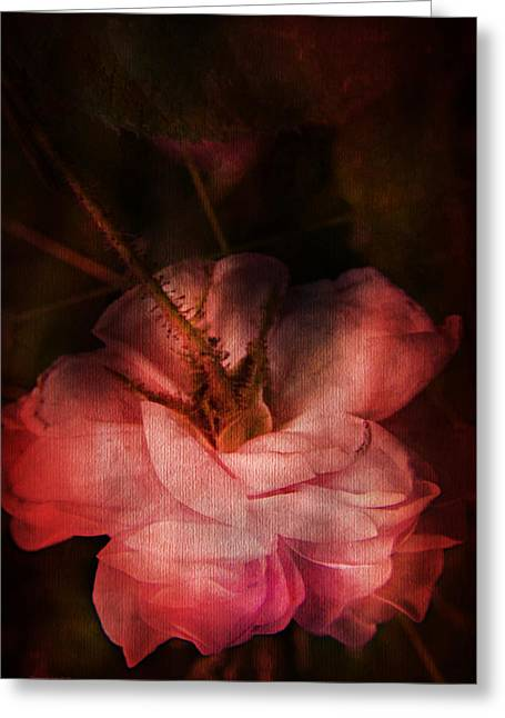 Centifolia Greeting Cards - Time Of Roses Greeting Card by Theresa Tahara