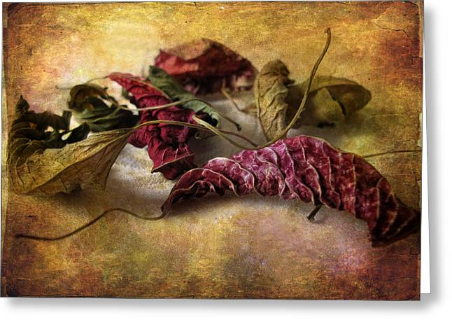 Leaf Abstract Greeting Cards - Timeworn Greeting Card by Jessica Jenney