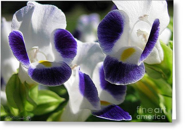 Duchess Greeting Cards - Torenia from the Duchess Mix Greeting Card by J McCombie