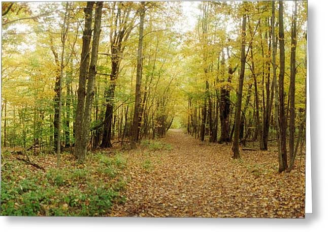 Fall Scenes Greeting Cards - Trail Through The Forest Greeting Card by Panoramic Images