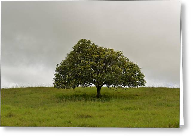 Lonly Greeting Cards - Tree Greeting Card by Leon Dafonte Fernandez