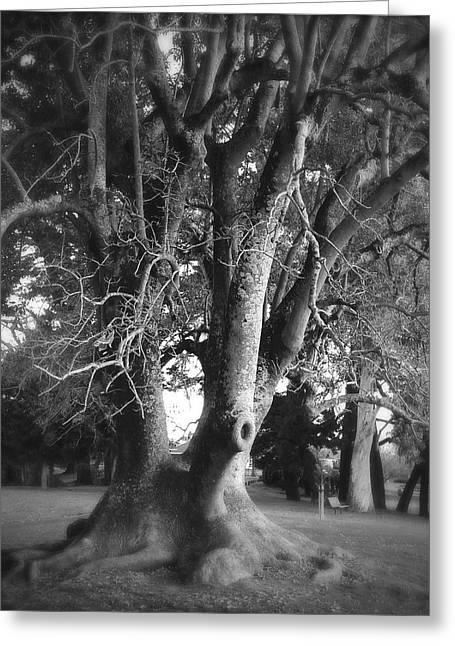 Bare Trees Greeting Cards - Tree Greeting Card by Les Cunliffe