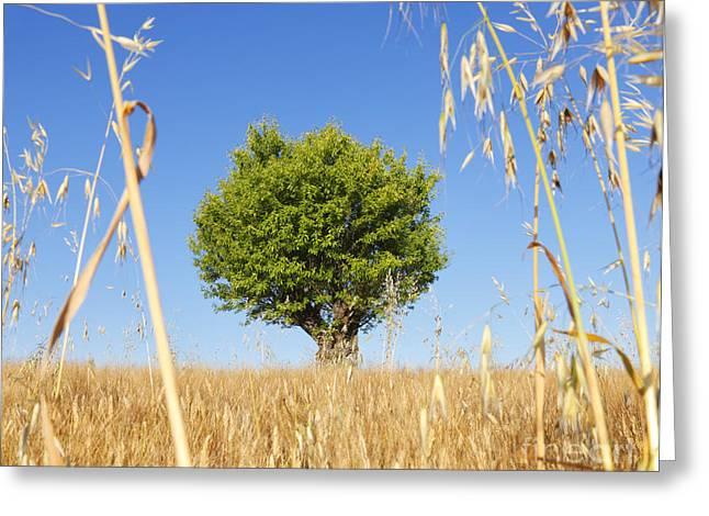 Wheat Field Sky Pictures Greeting Cards - Tree Greeting Card by Nino Marcutti