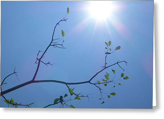 Fineartamerica Greeting Cards - Tree Greeting Card by Rogerio Gomes