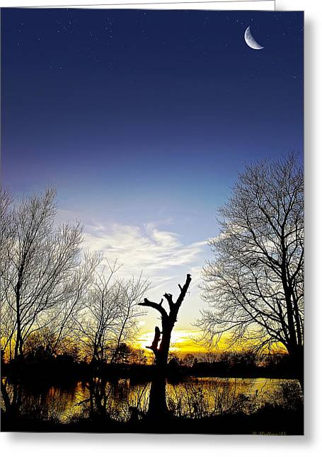 Artistically Altered Greeting Cards - Tree Silhouette Greeting Card by Brian Wallace