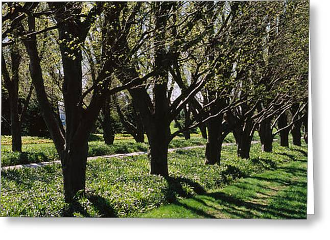 Garden Scene Photographs Greeting Cards - Trees Along A Walkway In A Botanical Greeting Card by Panoramic Images