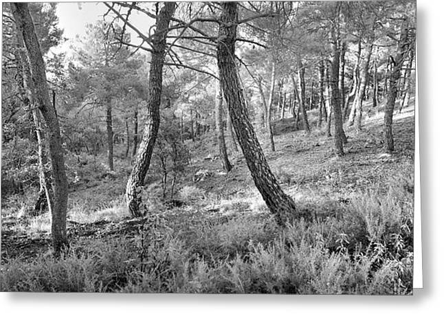 Spain Greeting Cards - Trees dance Greeting Card by Guido Montanes Castillo