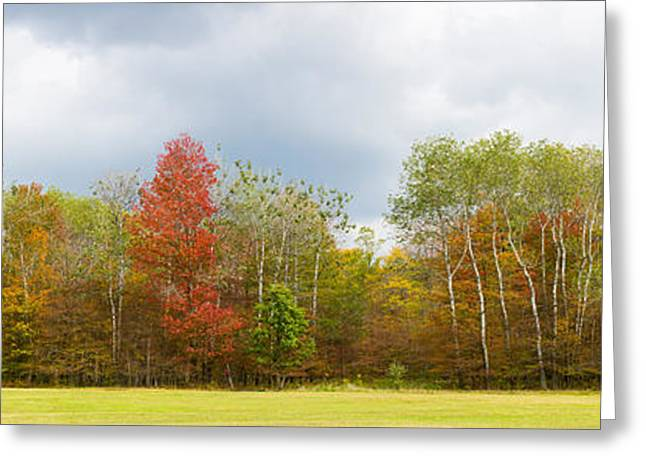 Autumn Colors Greeting Cards - Trees In A Forest, Allegany State Park Greeting Card by Panoramic Images
