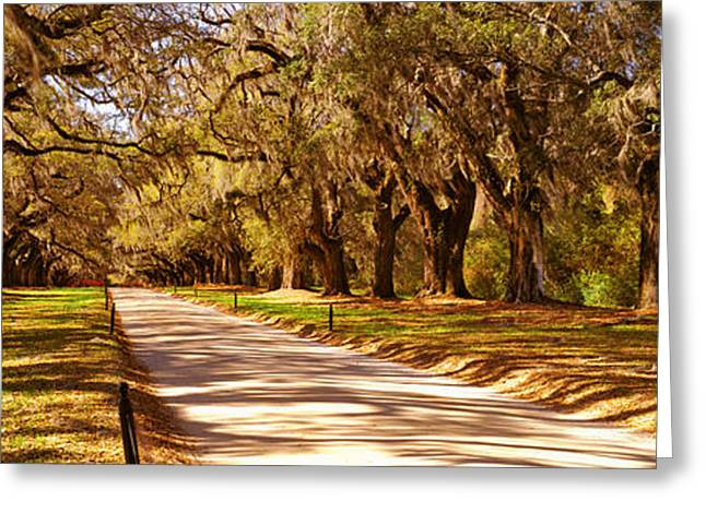 Boone Hall Greeting Cards - Trees In A Garden, Boone Hall Greeting Card by Panoramic Images