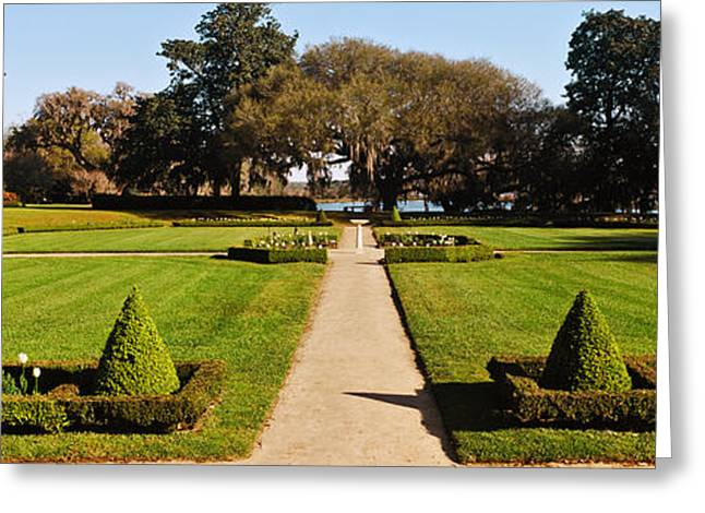 Middleton Greeting Cards - Trees In A Garden, Middleton Place Greeting Card by Panoramic Images