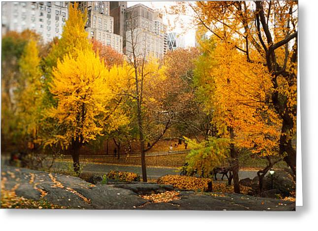 Trees In A Park, Central Park Greeting Card by Panoramic Images